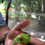 Red Eyed Frog ( one of the staff members found to show us!)