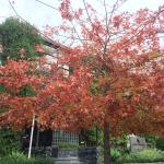 Autumn is a great time of year. The tree lined street the building is on looked lovely in April