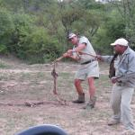 Our trackers playing with the remnants of the lions kill.