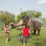 Our elephant, first splashing herself and then me!