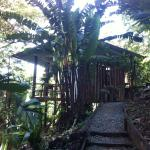 La Loma Jungle Lodge and Chocolate Farm Foto