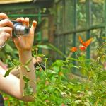 Another tourist capturing a picture with a colorful butterfly