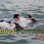Dolphin Coves Encounter_Real Tours Jamaica