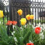 Spring outside the gates of the Essex Inn