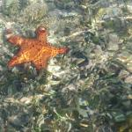Lots of beautiful starfish to see. This is from kayak