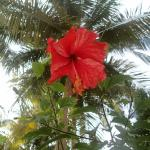 Hibiscus and palm