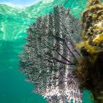 sea fan while snorkeling in front of Infinity Bay Resort