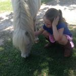 At the petting zoo