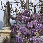 Wisteria at nearby Villa Barbianello