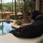Parker likes to keep an eye on the pool.