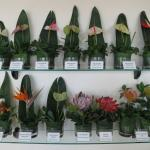 Flower display in Reception area