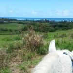 View from between the horse's ears.