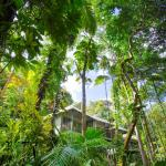Rooms high in the canopy