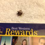 Another dead spider in the room