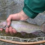 Trout Zone Anglers