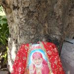 holy-tree in Resort Village
