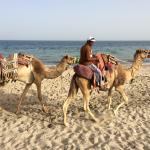 Camel and pony rides on the beach