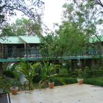 the rooms on stilts surrounded by garden/jungle