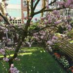 View of magnolia tree at Hotel Aalders