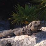 Take time in the mornings to say hello to Bernardo and friends sunning themselves on the rocks b