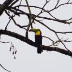 Lots of Toucans and other birds around