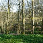 The woods opposite which belong to Thorney Mire