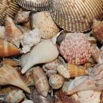 Abundant collection of shells