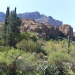 Mountain view with cactus and desert trees