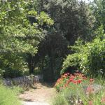 garden and nature