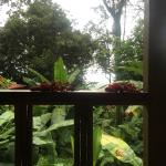 Foto de Samasati Retreat & Rainforest Sanctuary