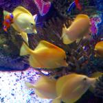 A few of the colorful fish