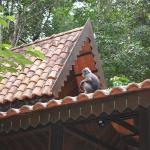 Monkey on top of rainforest chalet