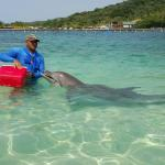 Dolphin Encounter at Anthony's Key