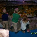Kid's view of a fish display