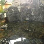 Waterfall / turtle pond