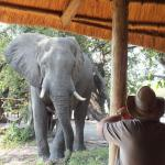 One of the elephants visiting the camp