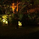 The front garden at night