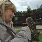 A Little Owl - yes that is the name of the breed