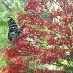 Morning on the butterfly garden