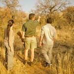 Walking safaris available on site