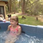 Yelverton Brook Eco Spa Retreat & Conservation Sanctuary Foto