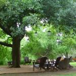 Shade under the live oaks in the garden
