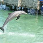 The dolphins on the Suncruise