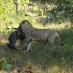 Foto van Tembe Elephant Park Accommodation