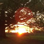 Sunset at the farm!!