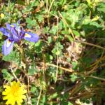 Wild flowes in the mountain walk
