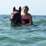 swimming the horses