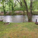 river view from swing , friendly geese ! Dont feed them !