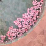 Petals in fountain.