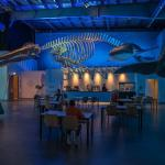 Whales of Iceland Cafe